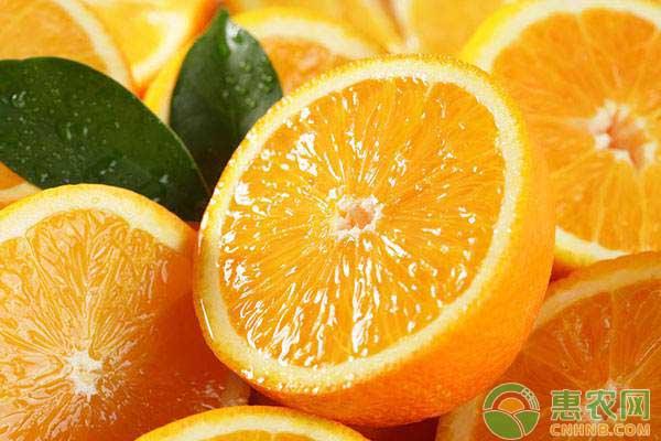橙子高产种植的肥水管理及防寒抗冻技术