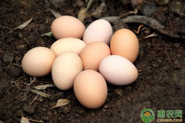 2018年2月13日全国鸡蛋最新价格行情