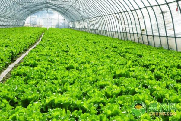 蔬菜种植技术