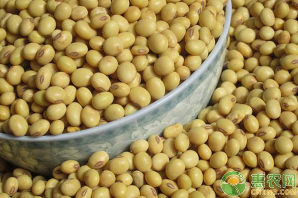最新大豆价格