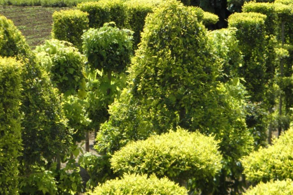 最新苗木价格行情:乡土树种、常绿观花树种或将涨价