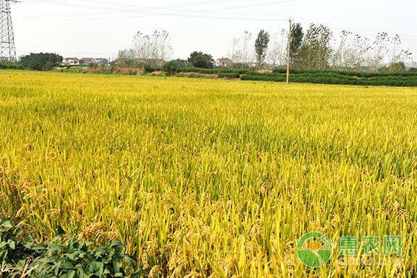 3月份开始申报种粮大户、农耕用地补贴了