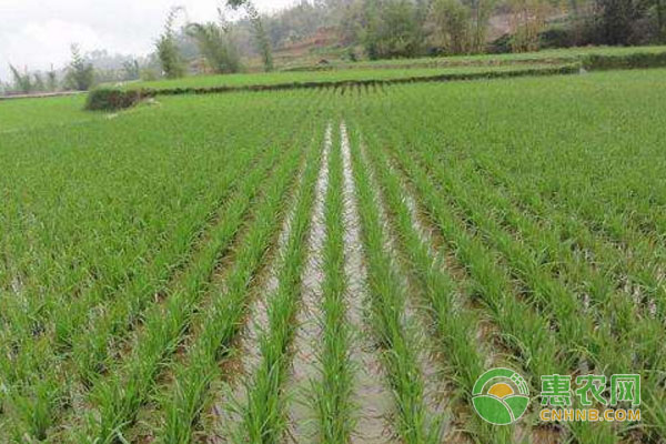 水稻的施肥方法