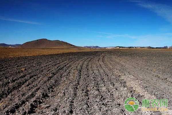 土地种植补贴