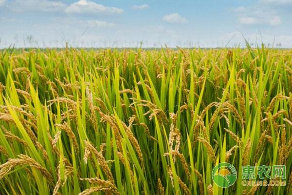 水稻的施肥时间