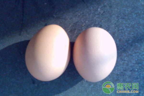 3月13日全国鸡蛋价格行情