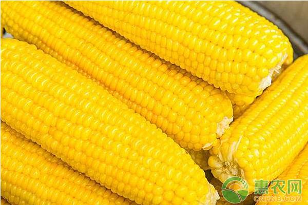 2018年玉米最高多少钱?今日玉米最新价格走势