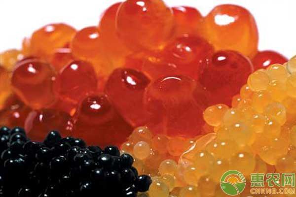 澳洲指橙怎么种?澳洲指橙种植条件及市场分析