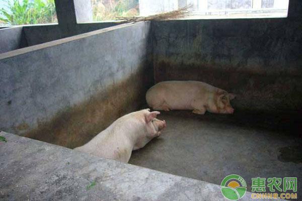 小型生猪养殖场存在的问题与解决方案