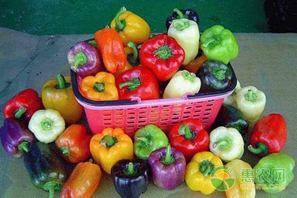 兰州地区彩色甜椒温室无土栽培技术
