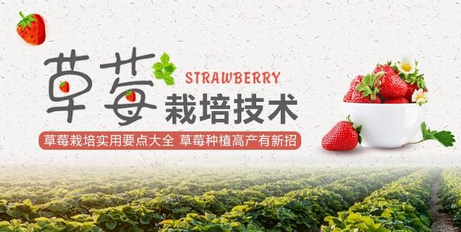 草莓栽培新技术,现代新农人必备宝典