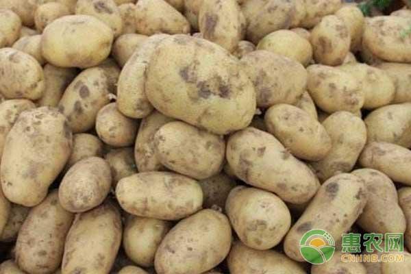 最新土豆价格