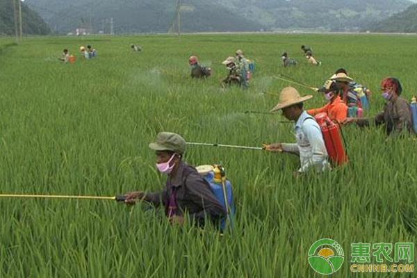 农药失效鉴别方法及失效农药的处理措施