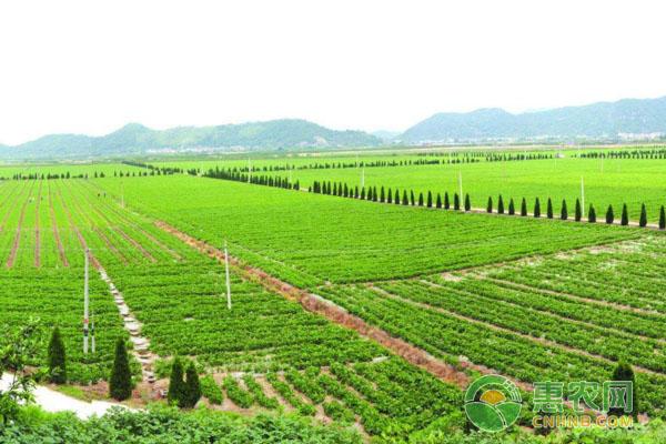 三農政策:2018年全國實施的五項農村改革
