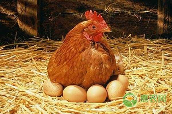 4月3日肉毛鸡、肉鸡苗价格配资平台 :双双下跌
