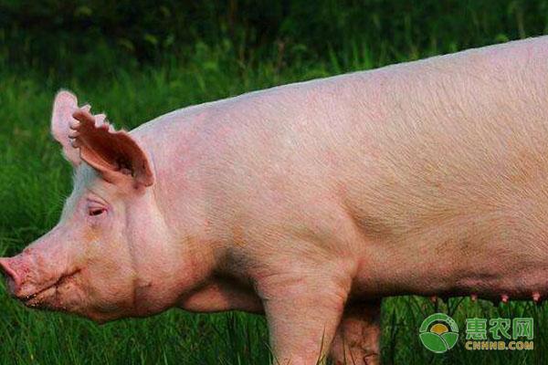 4月10日全国生猪标价行情:渡度过低谷期,猪价回温