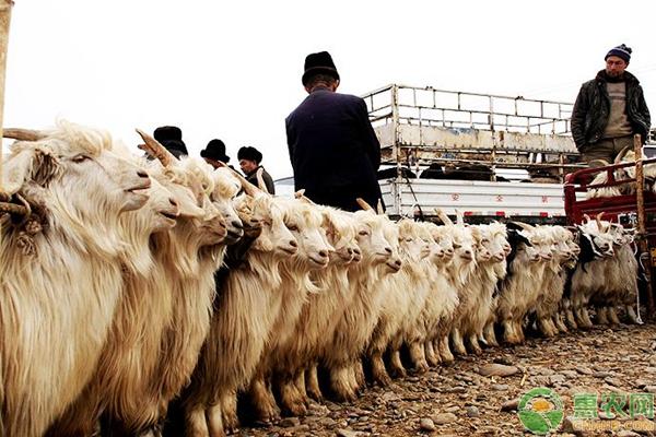 全国牛羊集交易市场大全