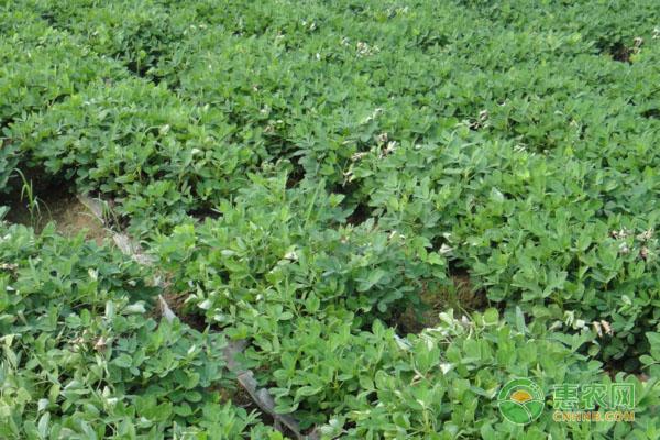 三农政策:什么是分享农业?能给农民带来哪些好处?