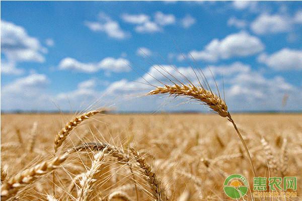 2018年4月16日全国各地区小麦收购价格