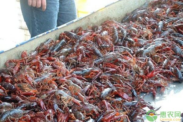 小龙虾养殖中微孔增氧机的安装方法及注意事项