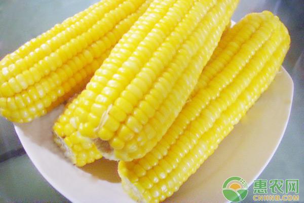 玉米日评:供应施压 玉米持续偏弱运行
