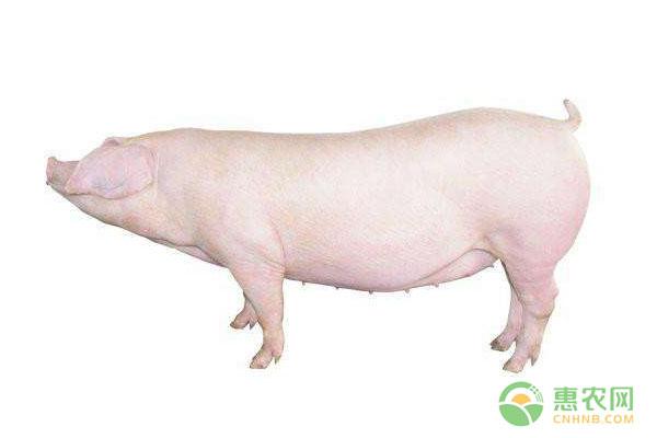 4月23日全国生猪价格行情:五一节前猪价能否上涨?