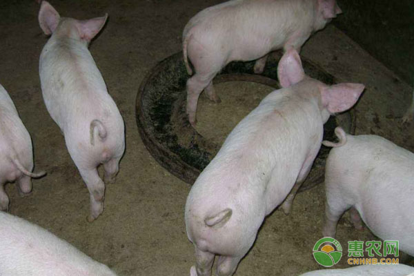 4月23日全国生猪价格行情