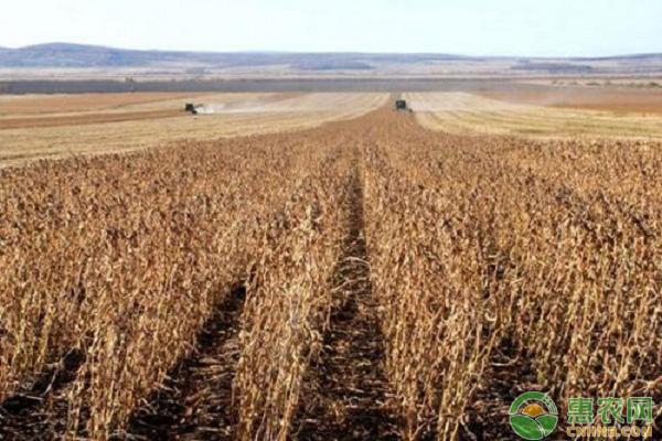 今日大豆市场整体趋稳,预计后期行情仍较低迷