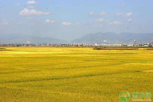 亚博竞彩APP官网_今日水稻多少钱一斤?4月24日全国水稻价