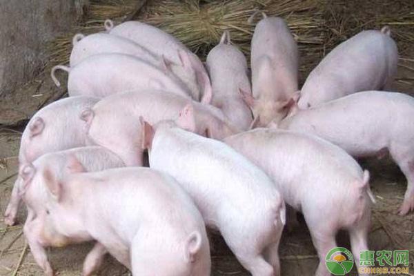 亚博竞彩APP官网_4月26日畜牧行情:猪价稳中有落,蛋价、