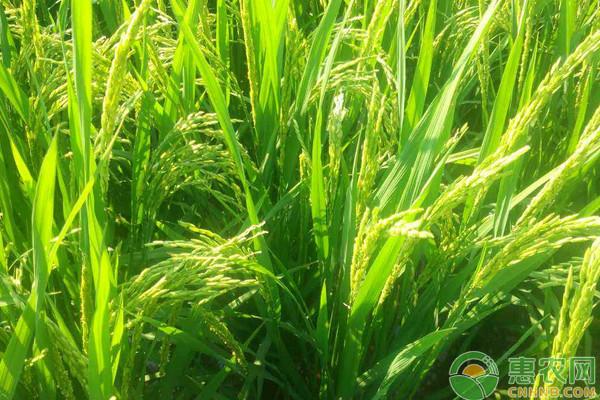 亚博竞彩APP官网_2018年4月27日国内小麦主产区市场收