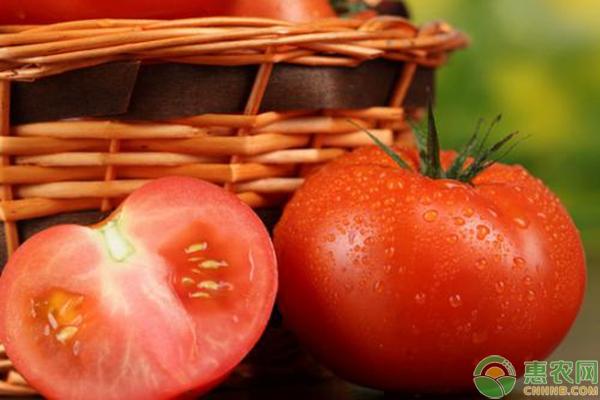 LOL总决赛外围竞猜_西红柿多少钱一斤?今日西红柿国内收购价格