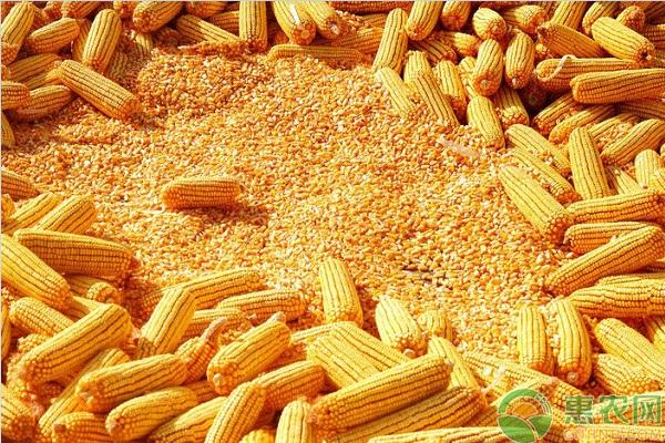 玉米如何施肥才能高产?玉米高产施肥技术要点