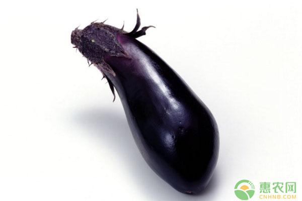 露地茄子怎么高产种植?茄子育苗定植、田间管理要点