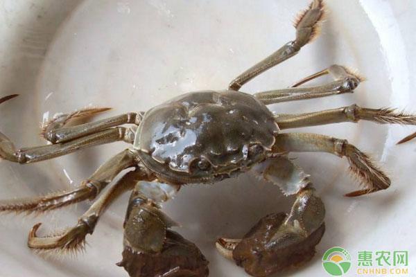 河蟹五月份技术管理有哪些?水质调控、疾病预防要点
