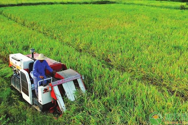 有机水稻的栽培管理技巧