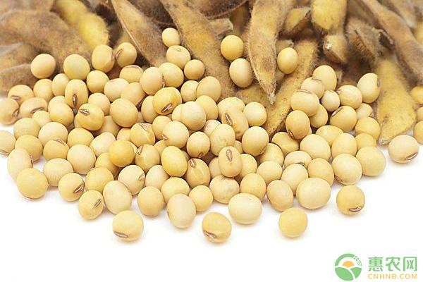 现在大豆多少钱一斤?5月17日国内大豆最新价格行情
