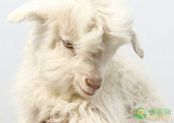 5月17日羊毛羊绒价格:价格连续大幅上涨