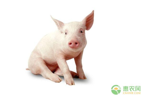 5月17日全国生猪价格行情:持续稳中微幅调整态势
