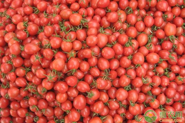 圣女果多少钱一斤?5月17日圣女果主产区最新价格行情