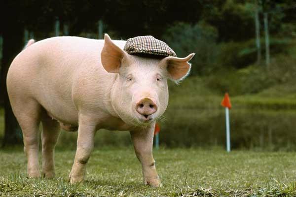 5月20日生猪价格行情:预计短期结算价稳定,局部微调