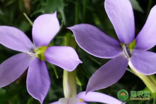 花卉养殖技术:园林花卉养护及种植培育技术有哪些?