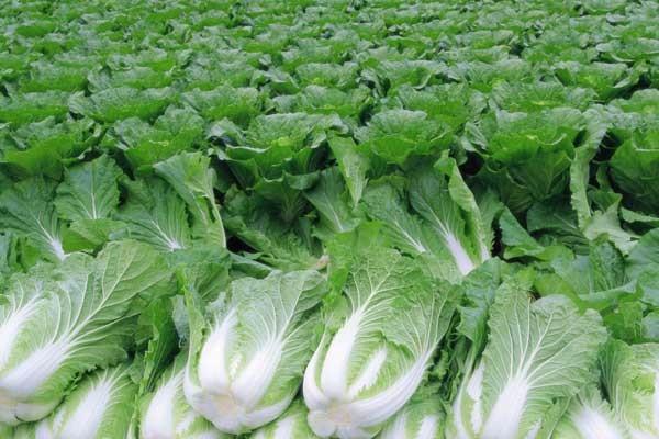 华南热区淡季蔬菜均衡生产技术