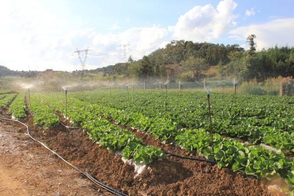 蔬菜生产怎么选择杀菌剂?推荐几种蔬菜低毒杀菌剂的使用
