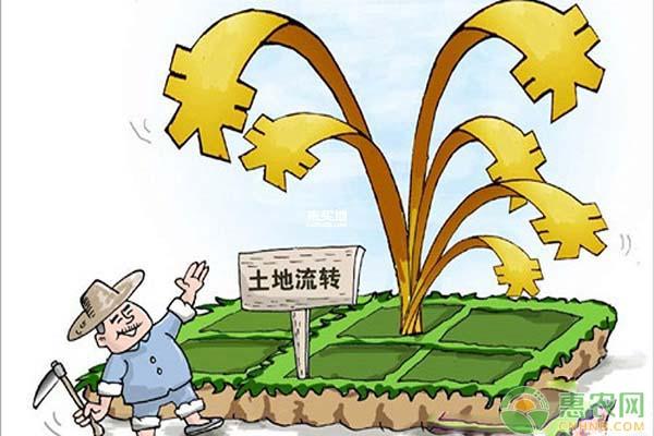 榕江古镇:通过土地流转,种植中药材助农脱贫增收