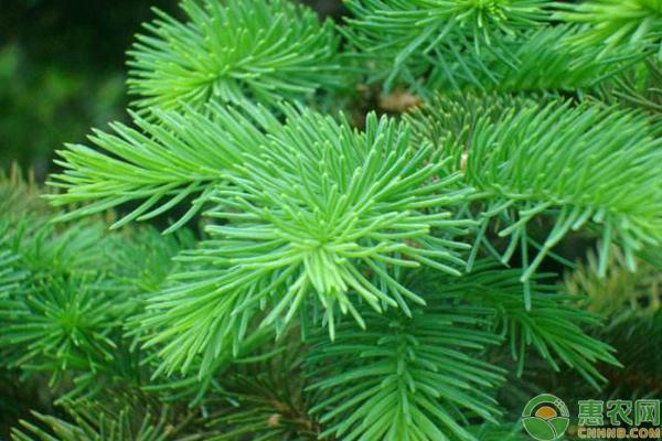 农村山里常见的野生植物,营养价值极高