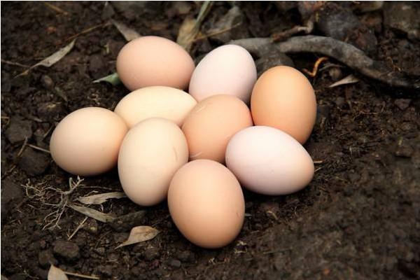 现在鸡蛋多少钱一个?5月26日全国鸡蛋价格走势
