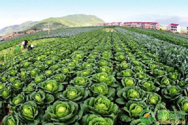 蔬菜种植如何防治细菌性病害?