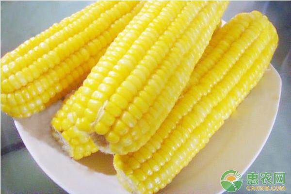 今日玉米价格多少钱一斤?6月14日各地玉米价格最新行情