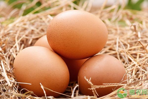 6月14日鸡蛋价格汇总